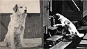 Cachorro alma livre gostava de viajar sozinho de trem na década de 1950 na Itália.