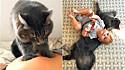 Jovem compartilha ternos momentos do seu gato com o seu filho desde o ventre da sua barriga.