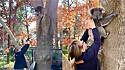 Voluntários resgatam filhote de coala e o reúnem com a sua mãe.