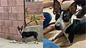 Mulher adota cachorra abandonada por ex-vizinhos.