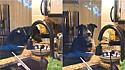 Cachorro foi flagrado fazendo travessura na cozinha.