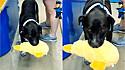 Cachorro furta produto de pet shop e se nega a devolver, tendo que o dono chamar a polícia.