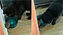 Dono flagra seu gato bebendo água na tigela na companhia de um rato.
