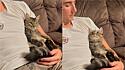 Homem que não queria gato é flagrado em cena adorável com uma felina