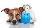 Como o brasileiro cuida e quanto gasta com seus pets