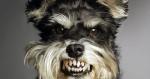 Seu cachorro não gosta de alguém? Cientistas demostram que ele pode estar certo
