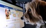 Facebook proíbe venda de animais na rede social: os usuários poderão denunciar as publicações de venda