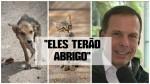 """""""ELES TERÃO ABRIGO"""" – JOÃO DÓRIA ANUNCIA PROGRAMA PARA CUIDAR DOS CÃES E GATOS DE RUA (VEJA O VÍDEO)"""