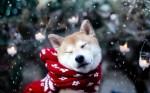 Seu pet está preparado para o inverno? Saiba os cuidados com a estação mais fria do ano