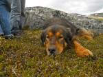 A história inesquecível do cachorro Mason que te fará se emocionar