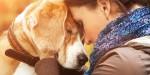 Por que perder um cachorro pode ser mais difícil do que perder um parente ou amigo