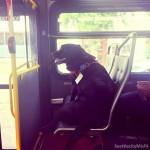 Cachorra tem passe livre em ônibus para poder ir passear na praça