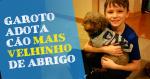 Garotinho visita abrigo de pets e adota o cão mais velho: conheça essa história