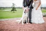 Como incluir cães na sua festa de casamento