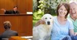 Pais de Pets agora podem solicitar pensão em caso de separação do casal