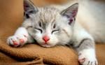 Como um gato proporciona boas energias para seu dono - A espiritualidade felina