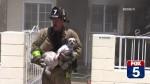 Bombeiro corajoso entra em casa em chamas para salvar cães (VEJA O VÍDEO)