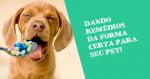 Aprenda a forma correta de dar remédios para seu pet