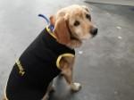 Cão de rua é promovido a segurança de shopping em Curitiba