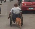 Cachorro é flagrado empurrando seu dono de cadeira de rodas