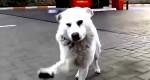 Cachorrinho de rua tem reação impressionante ao receber carinho - Muito Emocionante <3