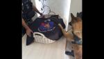 Cachorra do BOPE de Curitiba emociona a internet ao se despedir de colega canino falecido