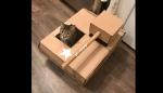 Gato assume a casa com o brinquedo mais bonito enquanto o dono está longe