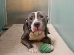 Família após ganhar seu 5º bebê abandona seu cão em abrigo