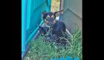 Gatinho e cãozinho são abandonados e um protege o outro de perigos