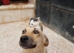 Filhote de gato que perdeu sua mãe convence cão de rua a adotá-lo