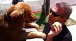 Cachorra fica no muro de casa jogando sua bolinha para pedestres (VEJA O VÍDEO)