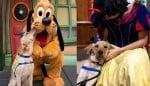 Cão adorável visita a Disneylândia e encontra todos os seus personagens favoritos