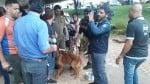 Cães heróis de Brumadinho: veja fotos exclusivas dos cães que encontraram 4 pessoas vivas