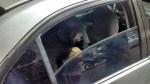 Cão chora por socorro após ser trancado em carro no RJ