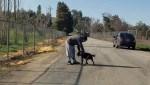 Cão suplica para que dono não o abandone (veja o vídeo)