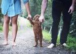 Direito Pet: Após o divórcio, como definir a guarda do animal de estimação?