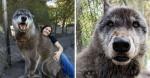 Cão-lobo largado em abrigo para morrer é salvo por outro abrigo protetor de animais