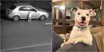 Cãozinho covardemente abandonado não consegue parar de sorrir após ser adotado