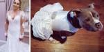 Noiva manda fazer vestido igual ao dela para sua cachorra participar de cerimônia de casamento