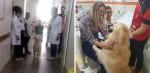 Terapia médica com cães auxilia na redução do estresse de crianças hospitalizadas
