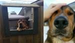 Moça que não podia ter cães em casa faz amizade com cachorro pela janela do vizinho