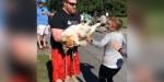 Cão gordinho que assistia a corrida de rua tira a atenção dos atletas