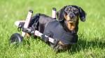 Cuidados que você deve tomar com a coluna vertebral de seu pet