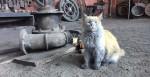 Sujinho, o gato que vive em uma ferrovia e certamente precisa de um banho