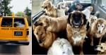 Ônibus escolar leva cães para 'creche' na fazenda