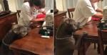Cão acompanha preocupado 'cirurgia' de seu querido travesseiro favorito