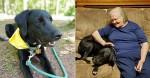 Vovó não gostava de cachorrinho - até que ele salvou sua vida