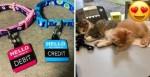 """Empresas que """"contratam"""" pets aumentam a qualidade de trabalho de funcionários"""