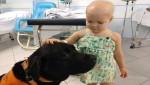 Labrador traz alegria a crianças doentes em hospital infantil em Florianópolis