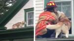 Husky super fofinho agradece bombeiro que o resgatou de um telhado (veja o vídeo)